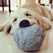 cute overload - dogs