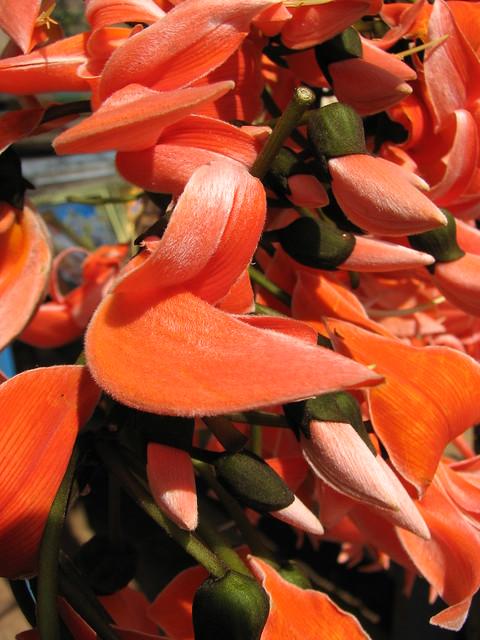 palash flower | Flickr - Photo Sharing! Palash Flowers Images