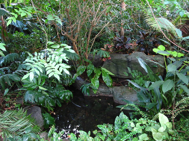 In The Tropical Pavilion of the Steinhardt Conservatory. Photograph by BBG.