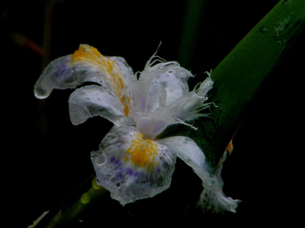 A Frozen Flower Eng Sub