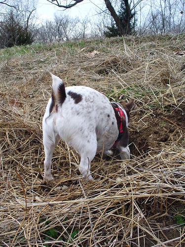 2010-03-26 - Ralphie & O-Ren - 0038