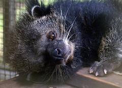 raccoon(0.0), wildlife(0.0), animal(1.0), mammal(1.0), fauna(1.0), whiskers(1.0), procyonidae(1.0),