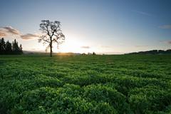 [フリー画像素材] 自然風景, 草原, 樹木, 風景 - アメリカ合衆国 ID:201203162000