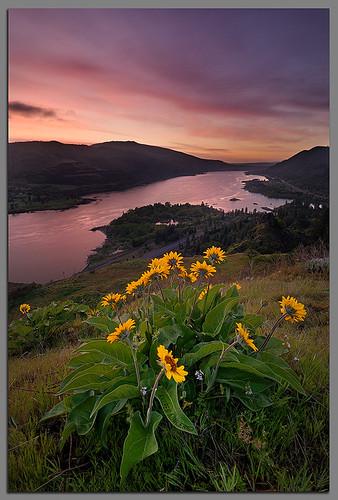 oregon sunrise nikon andrew explore wildflowers crg columbiarivergorge d300 1224mmf4 kumler