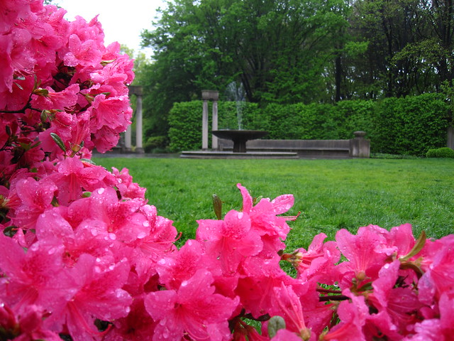 "The Osborne Garden of BBG with azaleas in bloom and the fountain and ""whispering benches"" in the distance. Photo by Rebecca Bullene."