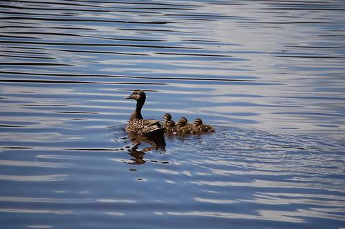 Mama and Babies
