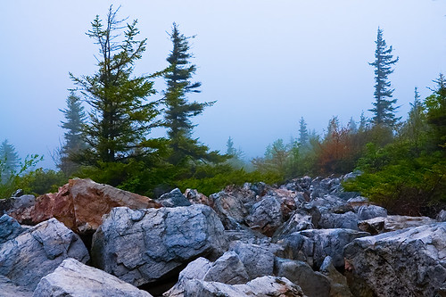Dolly Sods Fog