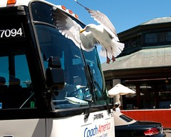 Bus and seagull