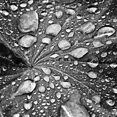 Rain has left its mark on the leaf