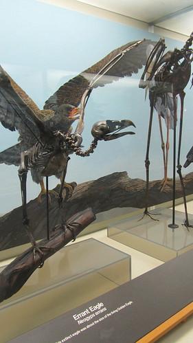 extinct animal