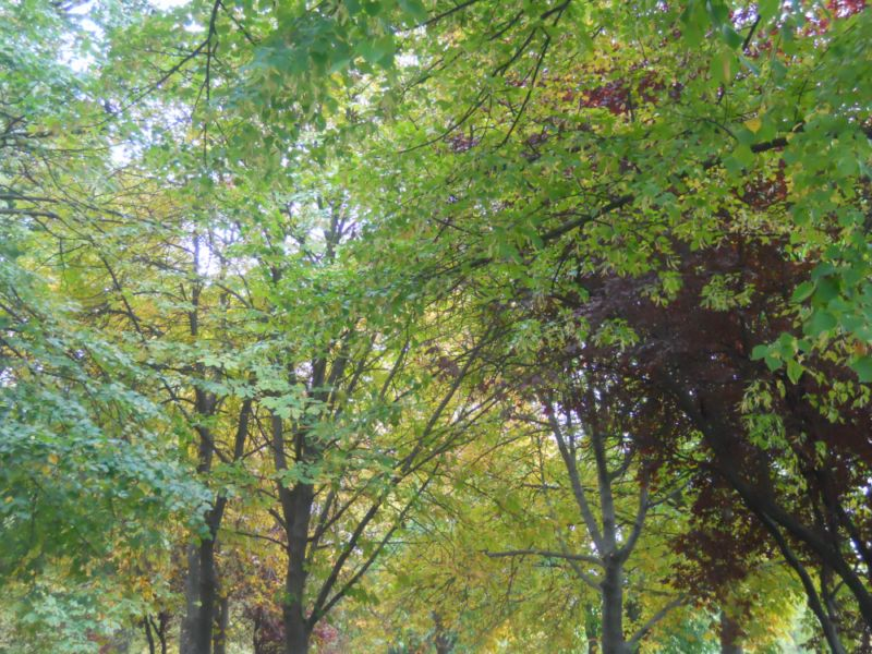 Árboles en otoño 2