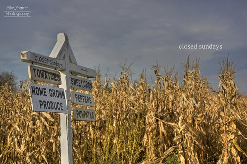 autumn fall field clouds corn pennsylvania sunday harvest amish pa stalk hdr cornstalk newwilington