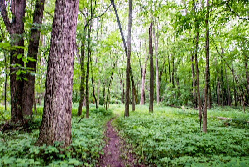Lloyd W. Bender Memorial Forest - June 22, 2017