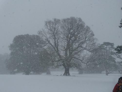 DSCN8412 Tree in the snow