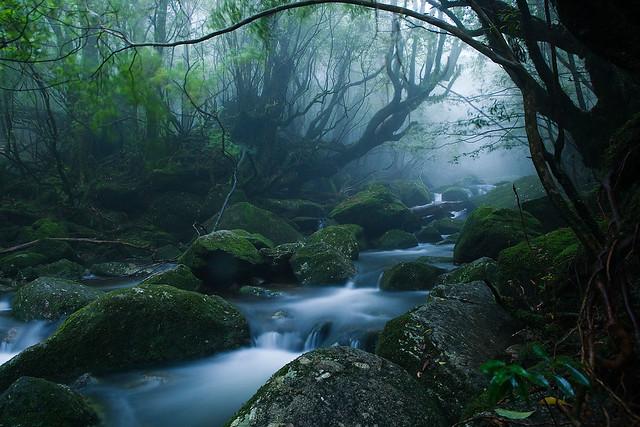 Bosques de la Isla de Yakushima, Japón