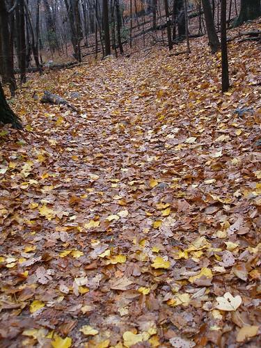 forest landscape sugarloaf