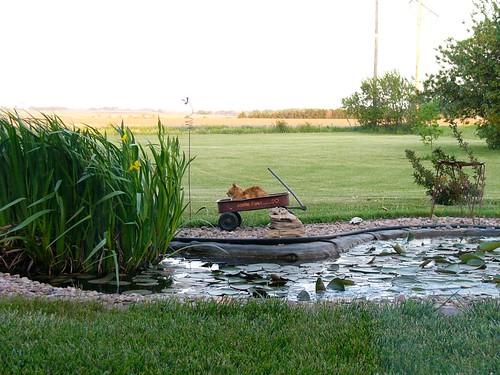 Goldfish ponds are easy robotskirts for Goldfish pond liner