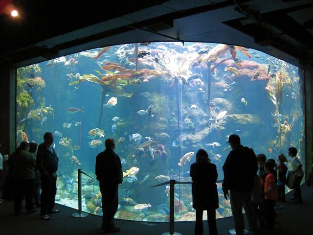 Steinhart Aquarium At California Academy Of Sciences San