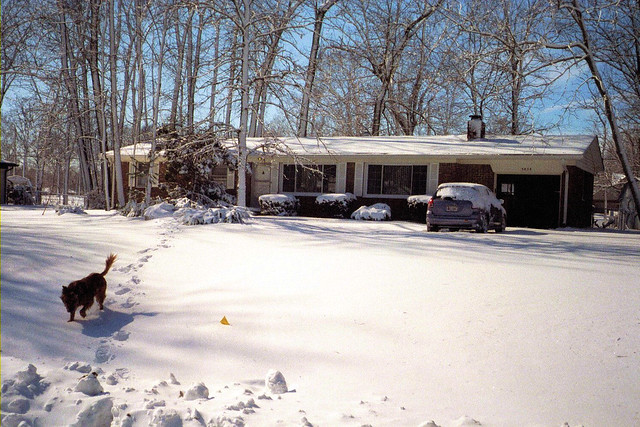Snow-covered yard with dog