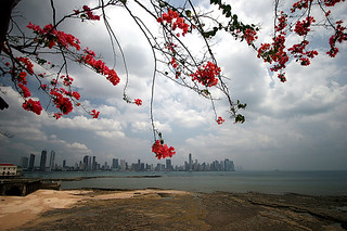 Bougainvillea over Panama