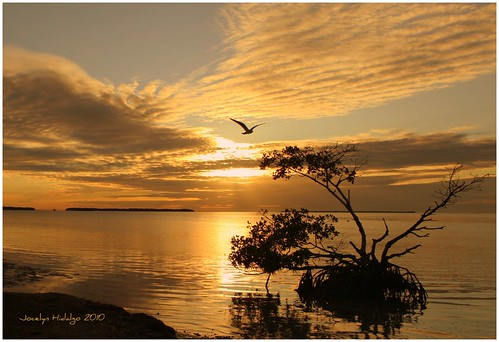 sunrise flying florida everglades osprey flamingopoint coth5