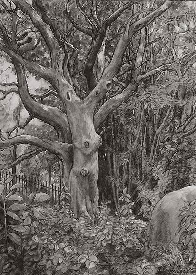 Crataegus sp., 2008  Charcoal and white chalk on gray paper, 24 × 18 in. © Copyright Brooklyn Botanic Garden