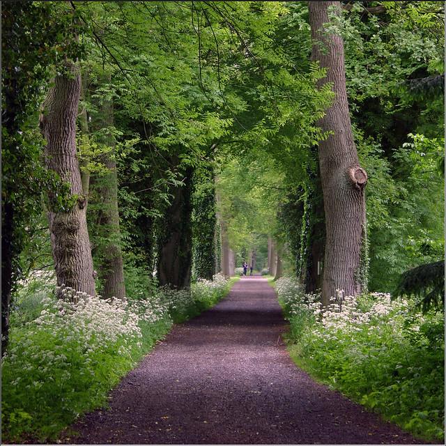 Oak lane flickr photo sharing click for details 4157 live oak lane