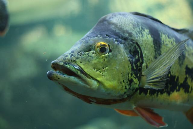 Header of A Fish
