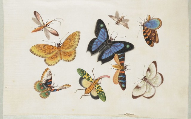 exquisite butterfly painting 1800s