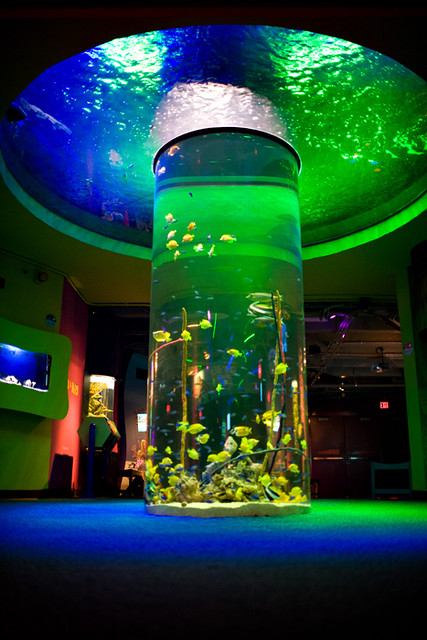 4709896486 9aa976d29c z Top Ten Aquariums in the United States