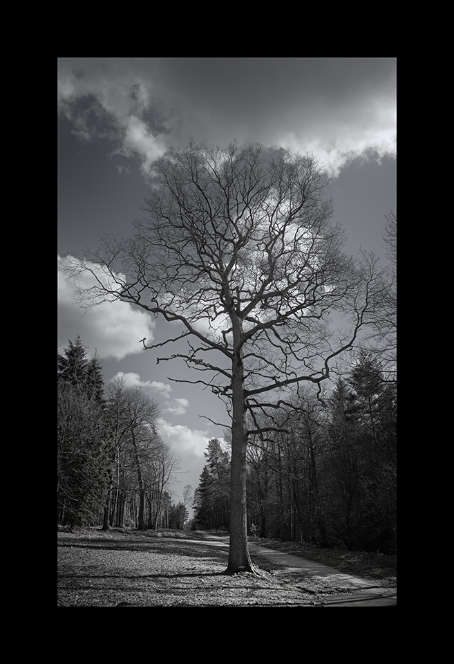 Photography: Lone Tree by Nicholas M Vivian