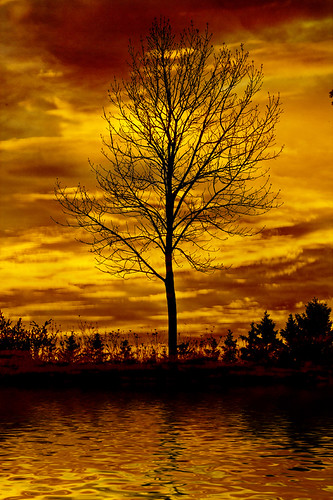 sunset sky orange sun plant canada reflection tree water silhouette yellow clouds sunrise canon landscape photography shadows spirit lonelytree cloudscapes waterreflection lseries sunsetlandscape superphotographer canon400d canonlserieslens goldstaraward canon24mmto105mmlisusm