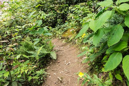 Sols Creek Falls trail - 8