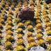 Tacuba / Parque Bicentario - Cactus Garden por ramalama_22