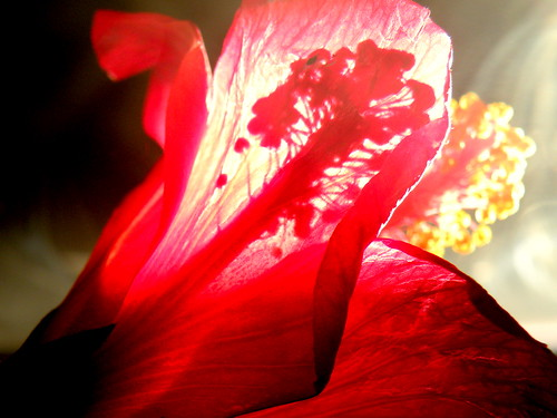 shadow red flower love nature
