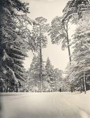 Winter in Uggleviken Forest, Stockholm, Sweden