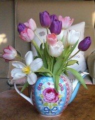 purple, pink and white tulips