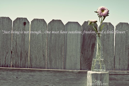 """Just living is not enough... One must have sunshine, freedom, and a little flower."""
