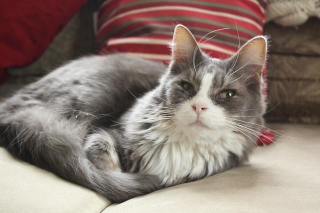 My male cat has a uti