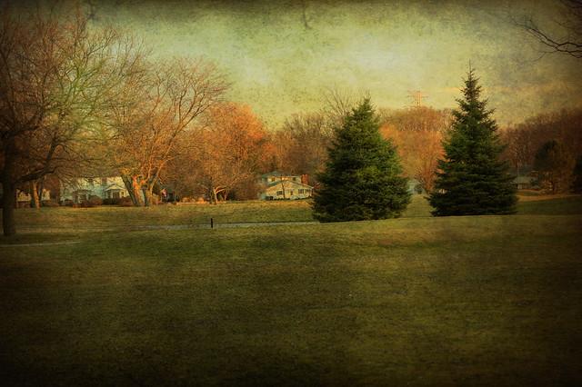Trees - Flickr CC BobDilworth