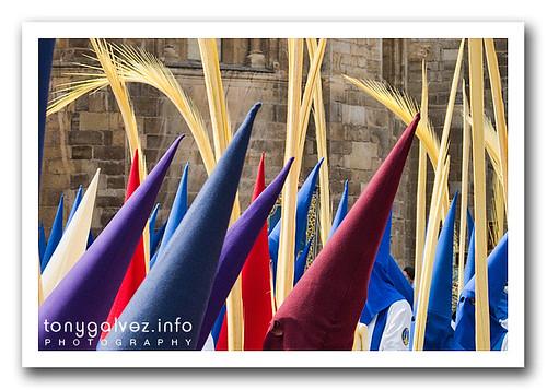 Palm Sunday / Domingo de Ramos