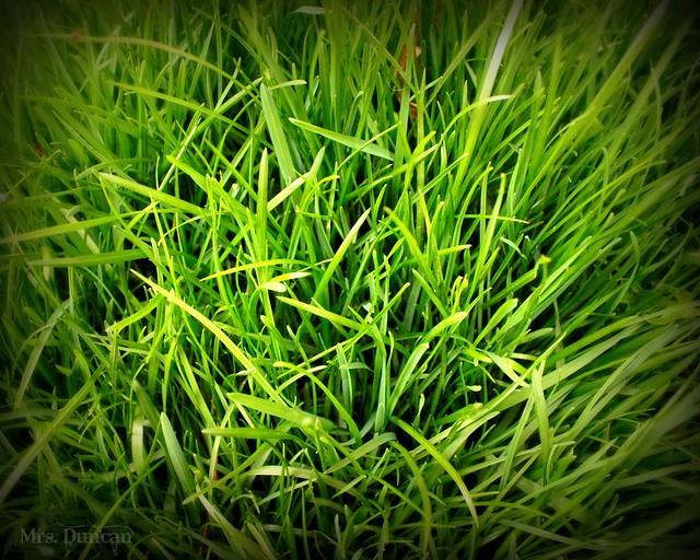Spring Grass - Flickr - Photo Sharing!