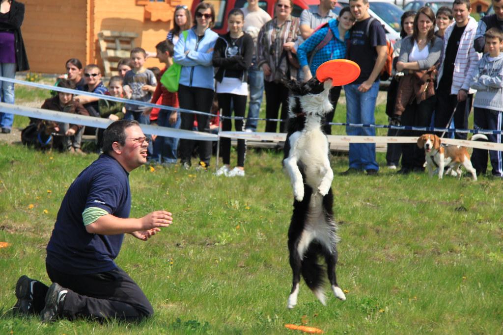 Romanian Rescue Dogs Peterborough