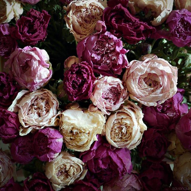 fleurs s ch es de bayet 2 flickr photo sharing. Black Bedroom Furniture Sets. Home Design Ideas
