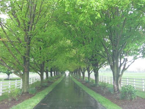 Tree Canopy shading driveway