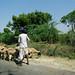 Small photo of On the way to Ambaji - Gujarat, India