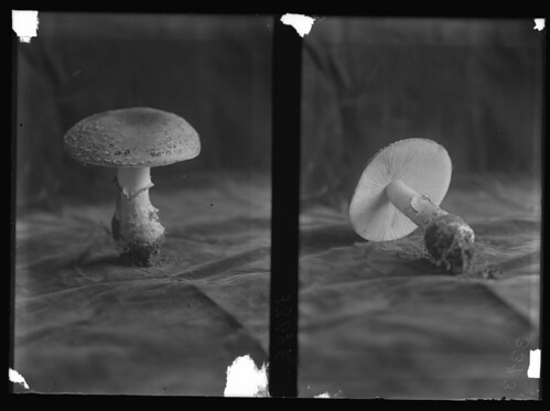 Two views of a mushroom