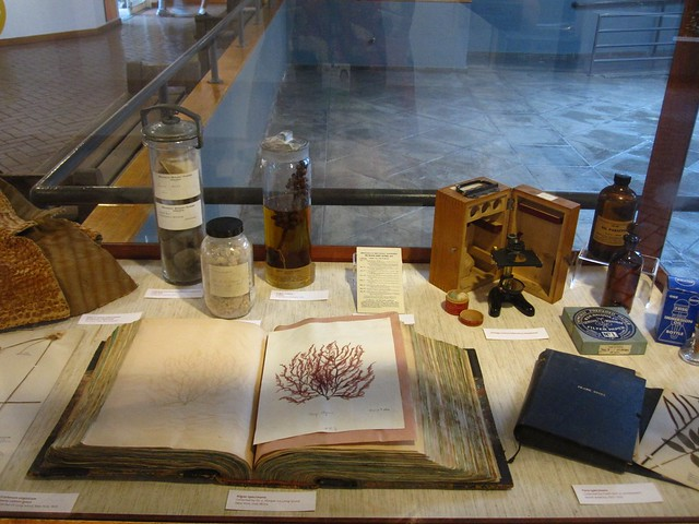 A display case featuring more from the BBG archives including a drawing of an algae specimen collected on Long Island in the mid-1800s.
