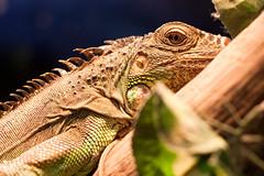 Piel de reptil // Reptile skin