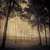 the ghosts among us by ladybugrock